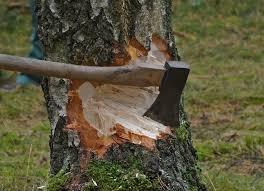 Vitaal bomenbestand behouden